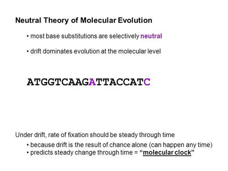 Neutral Theory of Molecular Evolution most base substitutions are selectively neutral drift dominates evolution at the molecular level Under drift, rate.