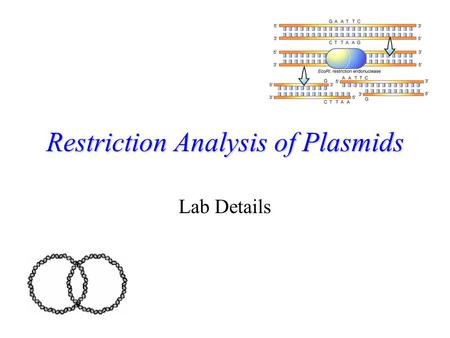 Restriction Analysis of Plasmids Lab Details Memory Jog What are plasmids? –Small, circular pieces of DNA found in bacteria What are restriction enzymes?