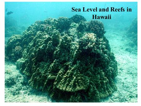 Sea Level and Reefs in Hawaii. Reefs 30 0 N and 30 0 S, shallow sunlight seas.