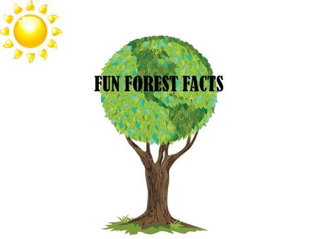 FUN FOREST FACTS. Directions Go through the next few slides to find out information on our 3 types of forests. After you go to a website, come back to.