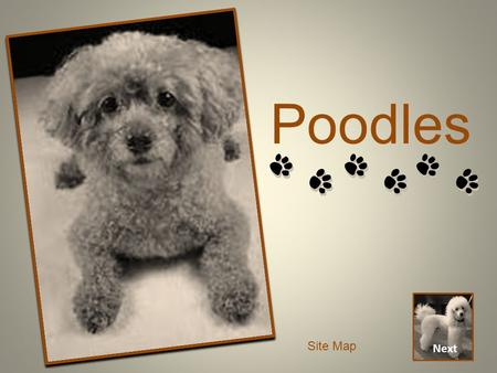 Poodles Next Site Map. Introduction Next Back When searching for the perfect pet, sometimes information from breeders and pet stores can be overwhelming.