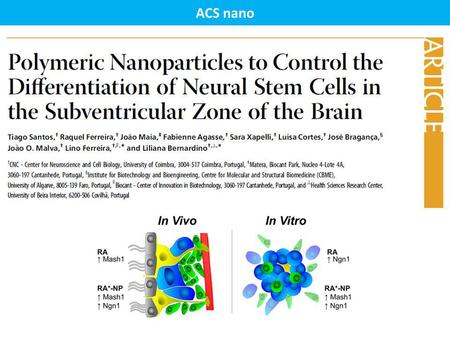 ACS nano. Subventricular Zone (SVZ) Subgranular Zone (SGZ) Rostral Migratory Stream (RMS) Neurogenic Niches - SVZ Neural Stem Cells (NSCs) display three.