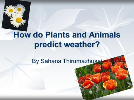How do Plants and Animals predict weather? By Sahana Thirumazhusai.