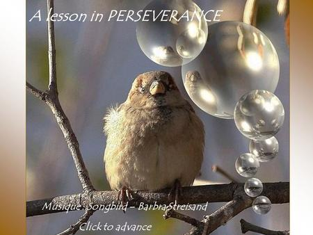 A lesson in PERSEVERANCE Musique : Songbird – Barbra Streisand Click to advance.