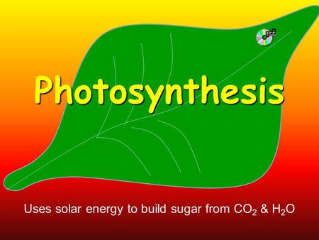 Photosynthesis Uses solar energy to build sugar from CO 2 & H 2 O.
