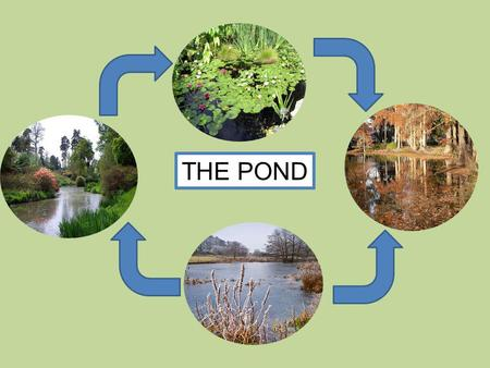 THE POND. A pond in SPRING Animals start their life cycle. Plants begin to grow. Its the time for new life.