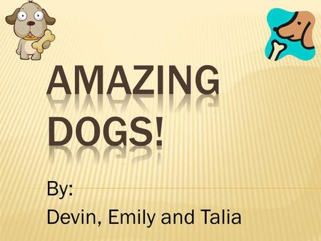 By: Devin, Emily and Talia. Have you heard of these three dogs? They are Labrador Retrievers, Beagles and Cavalier King Charles Spaniels. Read more to.