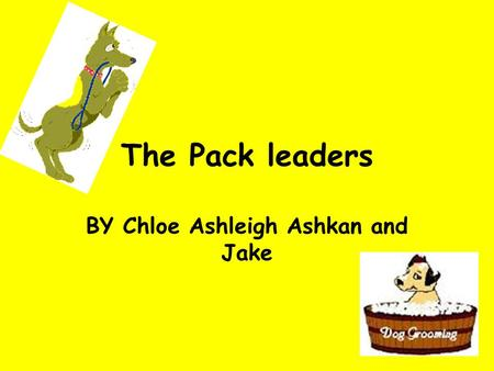 The Pack leaders BY Chloe Ashleigh Ashkan and Jake.
