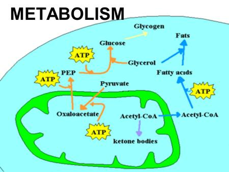 METABOLISM. YOU MUST KNOW… THE KEY ROLE OF ATP IN ENERGY COUPLING THAT ENZYMES WORK BY LOWERING THE ENERGY OF ACTIVATION THE CATALYTIC CYCLE OF AN ENZYME.