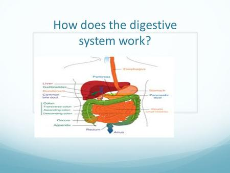 How does the digestive system work? Do you know all the parts of the digestive system? One thing of the digestive is that some of the parts are the mouth.