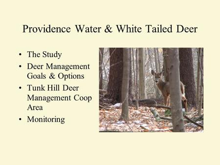 Providence Water & White Tailed Deer The Study Deer Management Goals & Options Tunk Hill Deer Management Coop Area Monitoring.