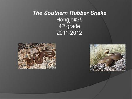 The Southern Rubber Snake Hongjo#35 4 th grade 2011-2012.