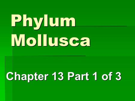 Phylum Mollusca Chapter 13 Part 1 of 3. General Characteristics Unsegmented Soft bodied critters - Bilateral symmetry Unsegmented Soft bodied critters.