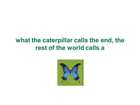 What the caterpillar calls the end, the rest of the world calls a.