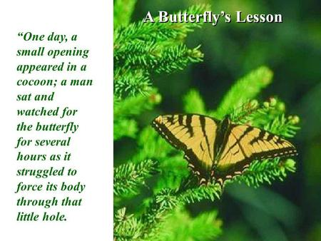 A Butterflys Lesson One day, a small opening appeared in a cocoon; a man sat and watched for the butterfly for several hours as it struggled to force its.