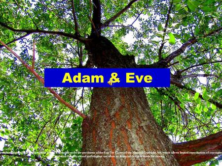Adam & Eve Copyrighted material that appears in this article is included under the provisions of the Fair Use Clause of the National Copyright Act, which.
