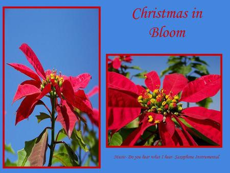 Christmas in Bloom Music- Do you hear what I hear- Saxophone Instrumental.
