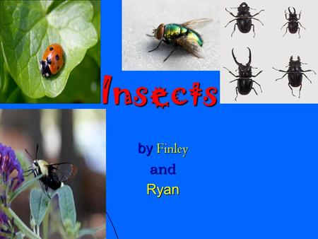 Insects by Finley andRyan. Contents Page 3 Crickets Page 4 Dragonfly Page 5 Dung beetles Page 6 Ladybird Page 7 Bees Page 8 Ants page 9 Glossary.
