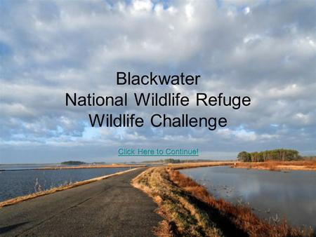 Blackwater National Wildlife Refuge Wildlife Challenge.