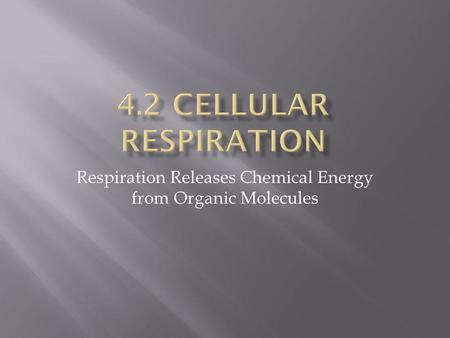 Respiration Releases Chemical Energy from Organic Molecules.