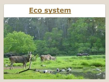 Eco system.