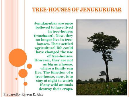 Jenukurubar are once believed to have lived in tree-houses (machaan). Now, they no longer live in tree- houses. Their settled agricultural life could have.