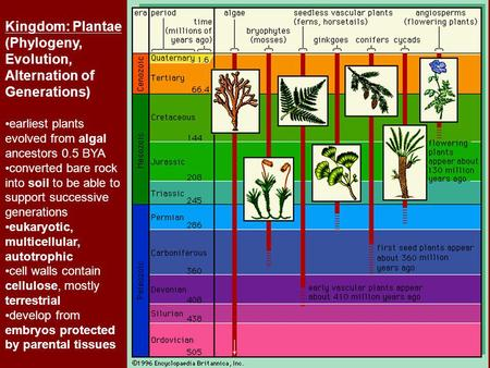 Kingdom: Plantae (Phylogeny, Evolution, Alternation of Generations) earliest plants evolved from algal ancestors 0.5 BYA converted bare rock into soil.
