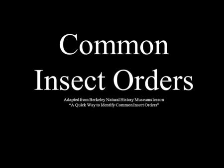 Common Insect Orders Adapted from Berkeley Natural History Museums lesson A Quick Way to Identify Common Insect Orders.