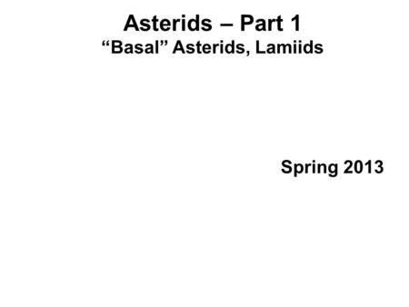 """Basal"" Asterids, Lamiids"