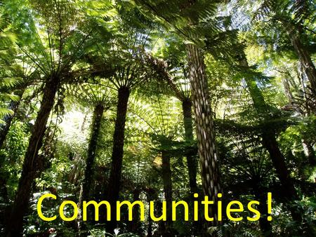 Communities!. All around us are organisms (living things) living in communities, e.g. in NZ native bush. Each species has its own population within the.