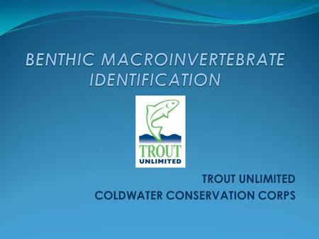 BENTHIC MACROINVERTEBRATE IDENTIFICATION