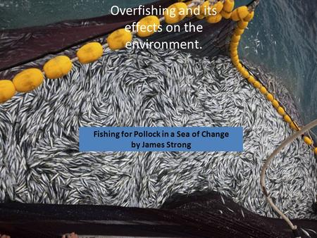 Overfishing and its effects on the environment. Fishing for Pollock in a Sea of Change by James Strong.