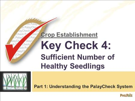 Crop Establishment Key Check 4: Sufficient Number of Healthy Seedlings Part 1: Understanding the PalayCheck System.