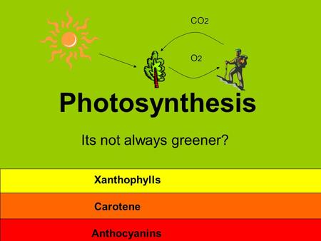 Photosynthesis Its not always greener? O2O2 CO 2 Anthocyanins Carotene Xanthophylls.