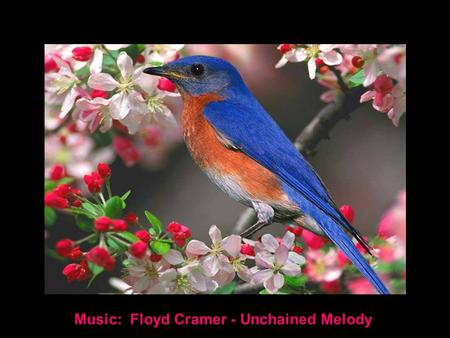 Music: Floyd Cramer - Unchained Melody AN ENEMY TAKES UP MORE SPACE IN OUR HEAD THAN A FRIEND IN OUR HEART.