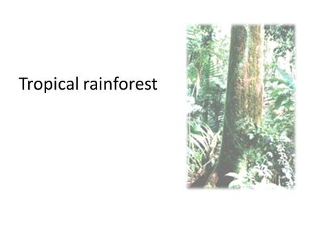 Tropical rainforest. Tropical Rainforest The tropical rainforest is a hot, moist biome found near Earth's equator. The world's largest tropical rainforests.