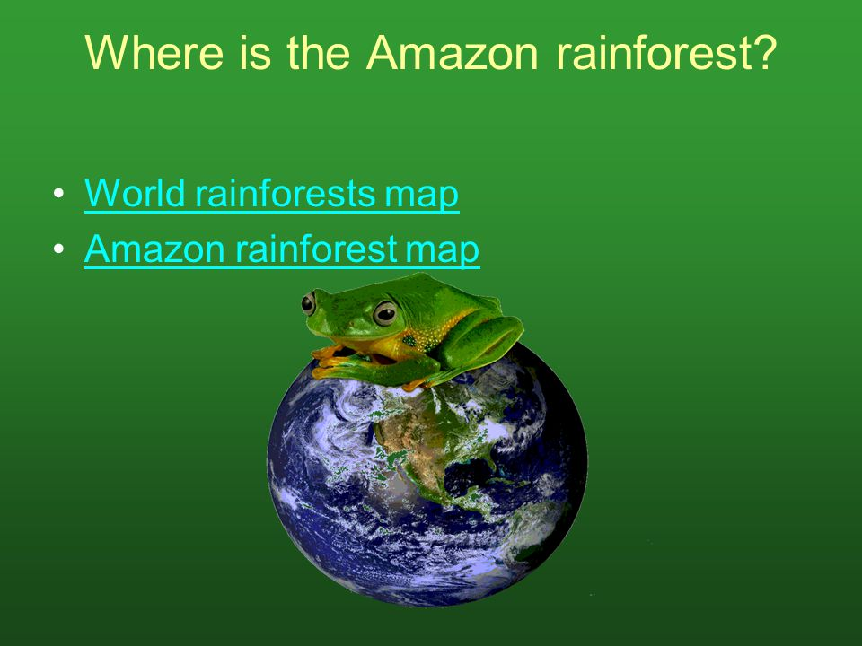 What are the layers of the rainforest? Click on the question and follow the links.