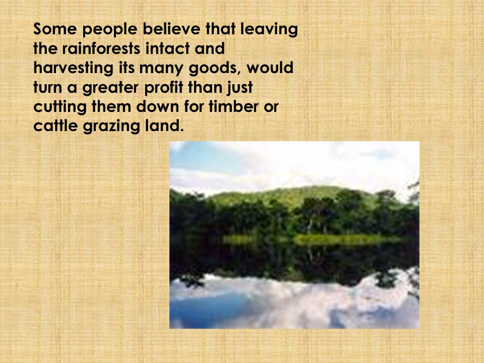 Bibliography: http://www.rain-tree.com/facts.htm http://www.enchantedlearning.com/subjects/ra inforest/ http://www.blueplanetbiomes.org/rainforest.htm http://www.rainforesteducation.com/medicines/ RFMedicines/medicines2.htm http://www.uic.edu/classes/osci/osci590/12_3% 20Earthly%20Goods%20Rain%20Forest%20Medic ine.htm