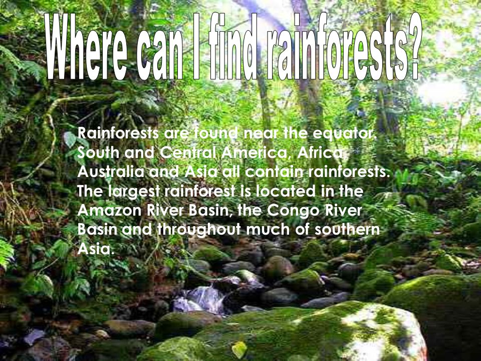 It is almost always raining in the rainforest, hence the name rain forest.