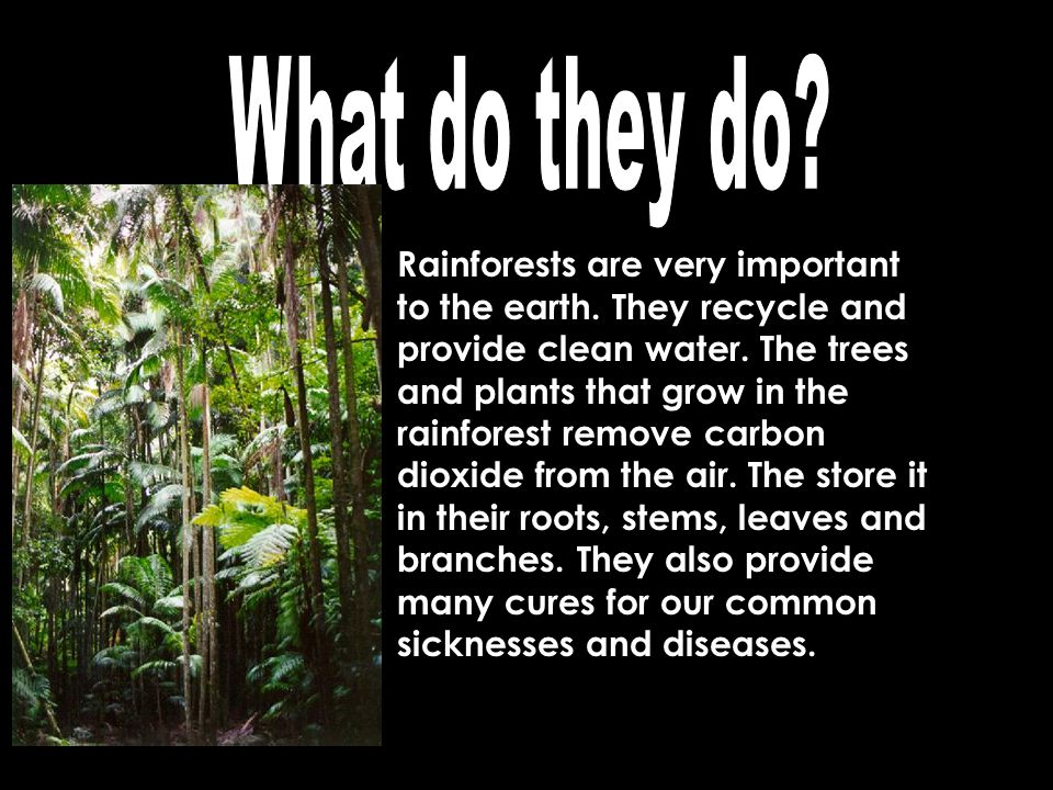 Rainforests are sometimes called The World's Largest Pharmacy because more than half of our medicines today have originated from the rainforest.