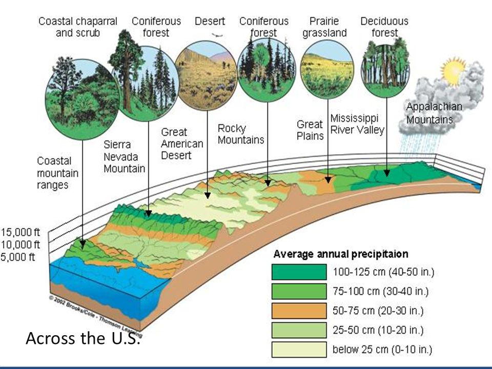 Productivity Net primary production: The amount of organic matter (biomass) that remains after primary producers use some to carry out cellular respiration Ecosystems vary in their net primary productivity, the rate at which primary producers convert energy to biomass.
