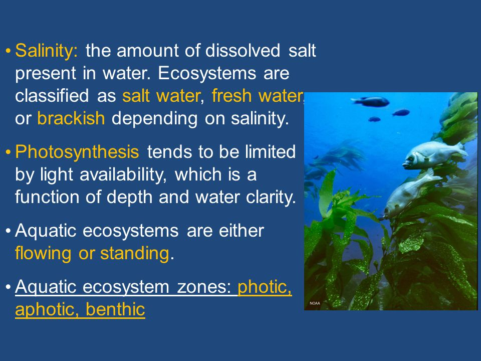 Aquatic Ecosystem Limiting Factors Limiting factors may include: Salinity Ph Sunlight Dissolved oxygen Temperature