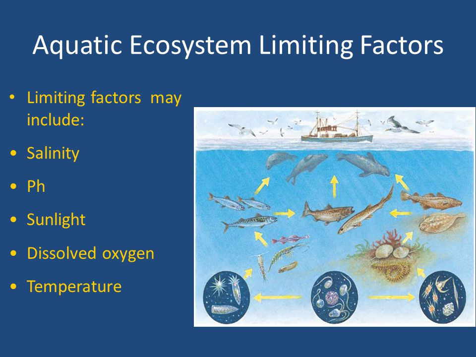 Freshwater Ecosystems: Ponds, Lakes, Inland Seas Salinity is less than 0.5 ppt (parts per thousand)