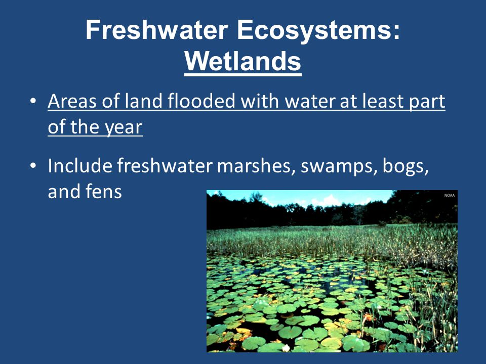 Freshwater Ecosystems: Rivers and Streams Bodies of surface water that flow downhill, eventually reaching an ocean or inland sea Delaware Water Gap