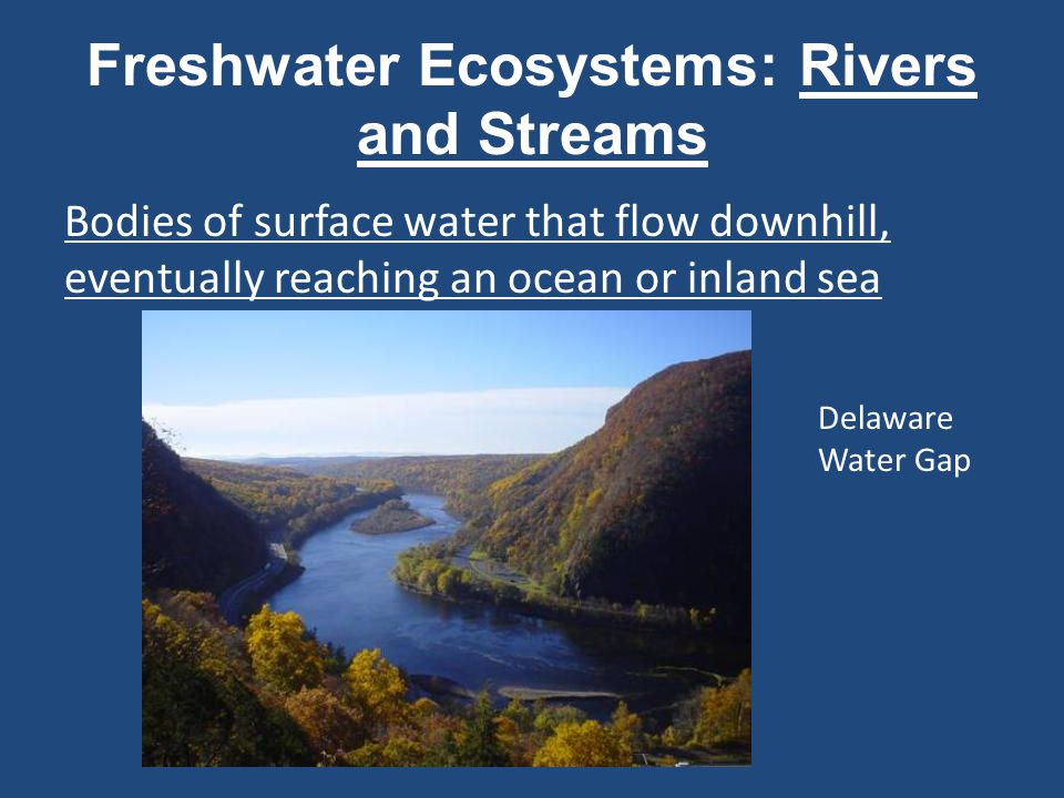 Estuaries Occur where a river flows into the ocean or an inland sea Coastal estuaries are brackish ecosystems; organisms must tolerate wide salinity and temperature ranges.