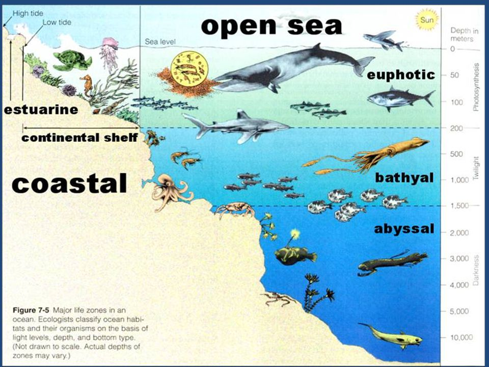 Chapter 6 Review Explain what biomes and aquatic ecosystems are Explain how biomes are characterized.