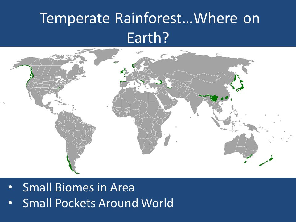 Temperate Rain Forests Locations Mid-Latitudes Usually near coastline Largest found in Pacific Northwest of U.S.