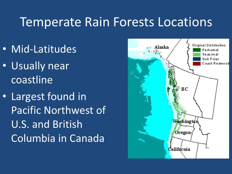 Climate of the Temperate Rain Forest WET, Year Round Rain Moderate Temperatures
