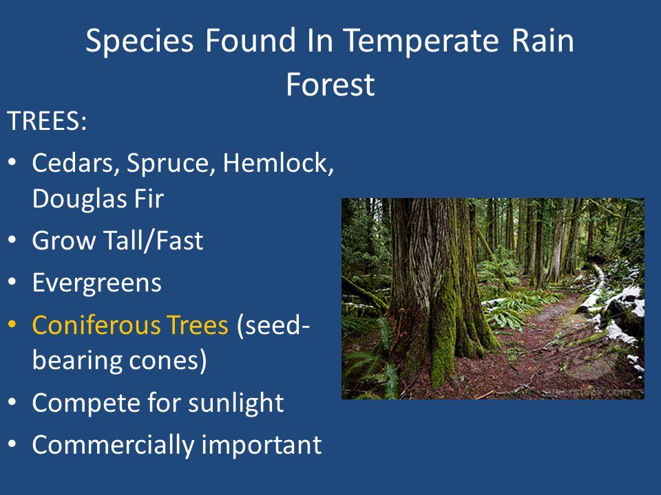 Species Found In Temperate Rain Forest Damp conditions perfect for moss Slugs Numerous amphibian creatures Squirrels Deer Elk