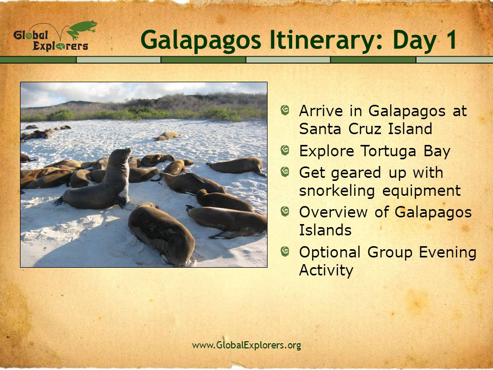 www.GlobalExplorers.org Galapagos Itinerary: Day 2 Visit Charles Darwin Research Center Learn about tortoise conservation issues Shop for handicrafts in the town of Puerto Ayora